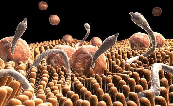 Инфекциозни болести