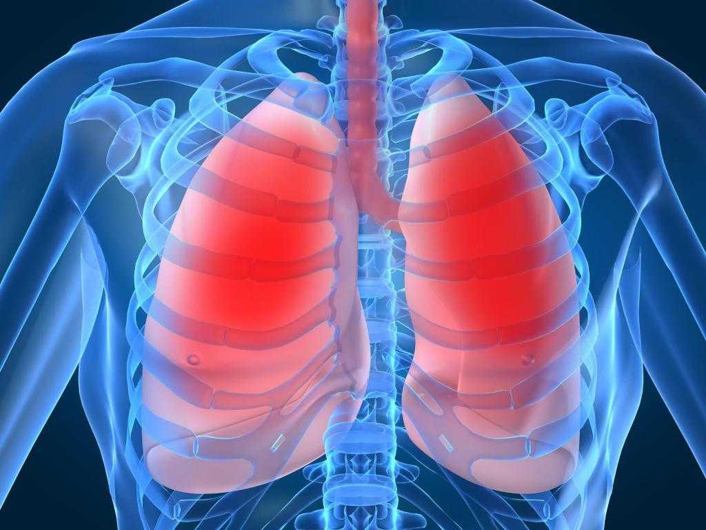 Human-Lung2-1024x768