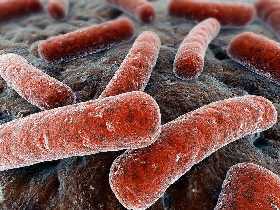 Mycobacterium_tuberculosis_14313982